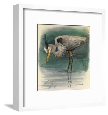 A Painting of a Great Glue Heron Hunting for Fish in Shallow Water-Louis Agassi Fuertes-Framed Art Print