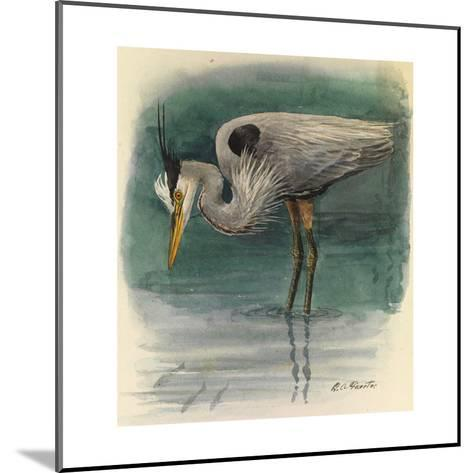 A Painting of a Great Glue Heron Hunting for Fish in Shallow Water-Louis Agassi Fuertes-Mounted Giclee Print