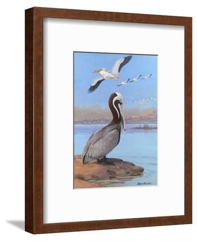 A Painting of Two Different Species of Pelican-Allan Brooks-Framed Art Print