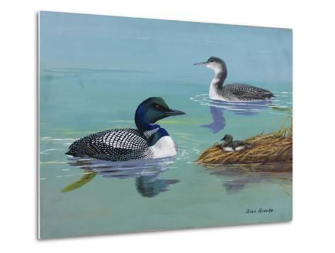 A Painting of Three Loons at Different Life Stages-Allan Brooks-Metal Print