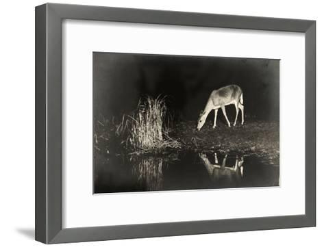 A View of a Red Deer's Reflection in the Lake as it Eats-George Shiras-Framed Art Print