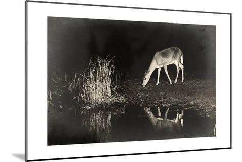A View of a Red Deer's Reflection in the Lake as it Eats-George Shiras-Mounted Photographic Print