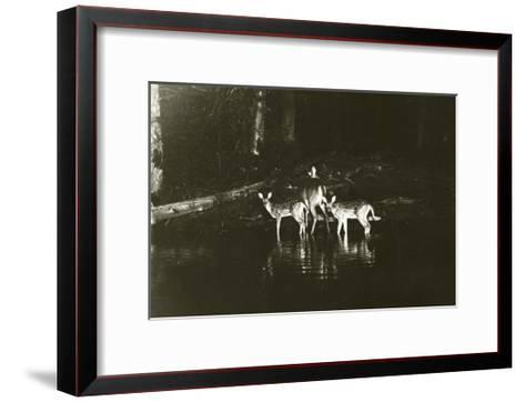 A Doe and Her Fawns are Caught by a Camera-George Shiras-Framed Art Print