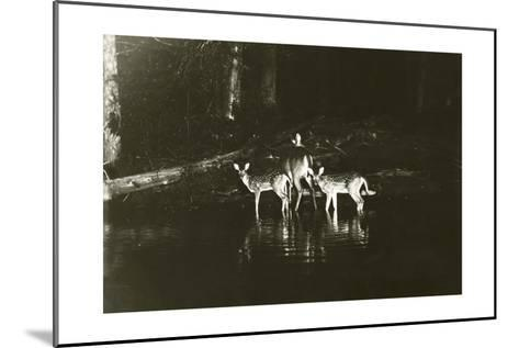 A Doe and Her Fawns are Caught by a Camera-George Shiras-Mounted Photographic Print