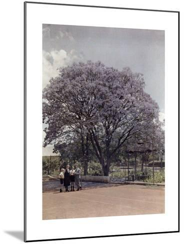 Locals Relax under a Blooming Jacaranda Tree-Melville Chater-Mounted Photographic Print