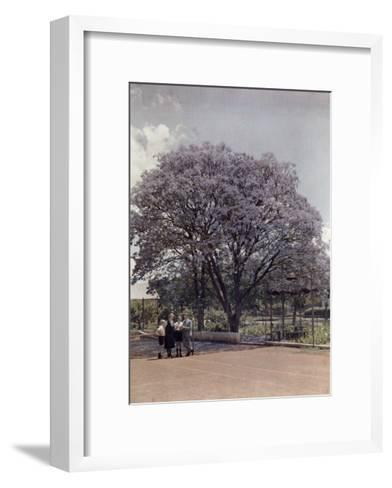 Locals Relax under a Blooming Jacaranda Tree-Melville Chater-Framed Art Print