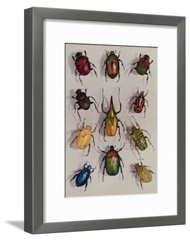 A Group of Scarabs from the Scarabaeid Family-Edwin L^ Wisherd-Framed Art Print