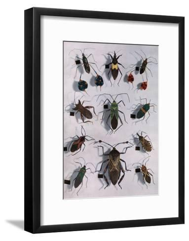 Collection of Assassin and Squash Bugs Photographic Print by Edwin L ...