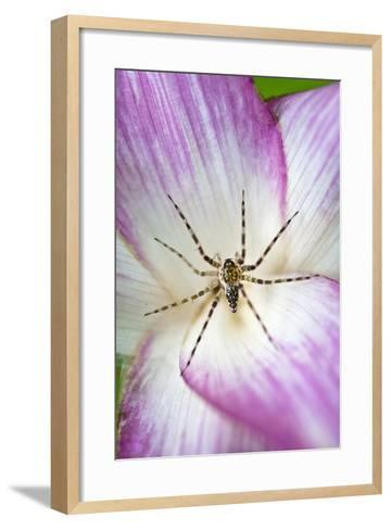 A Tiny Spider Inside Bright Pink Petals Waits to Ambush Prey Attracted to the Flower-Jason Edwards-Framed Art Print