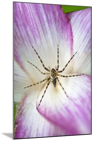A Tiny Spider Inside Bright Pink Petals Waits to Ambush Prey Attracted to the Flower-Jason Edwards-Mounted Photographic Print