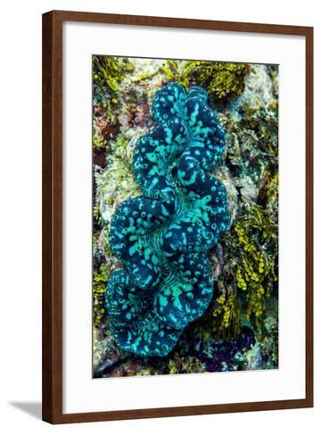 The Iridescent Neon Blue Lips of a Giant Clam on a Tropical Coral Reef-Jason Edwards-Framed Art Print