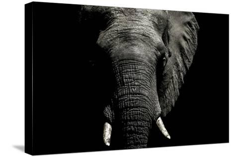 The Wrinkled Trunk and Face of an African Elephant-Jason Edwards-Stretched Canvas Print