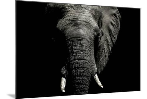 The Wrinkled Trunk and Face of an African Elephant-Jason Edwards-Mounted Photographic Print