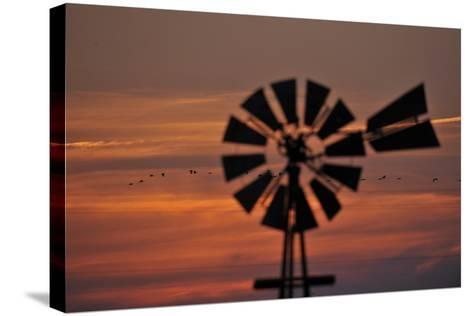 A Silhouetted Windmill and a Flock of Migrating Sandhill Cranes at Sunset-Michael Forsberg-Stretched Canvas Print