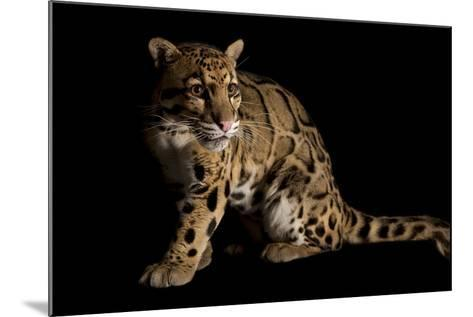 A Federally Endangered Clouded Leopard, Neofelis Nebulosa-Joel Sartore-Mounted Photographic Print
