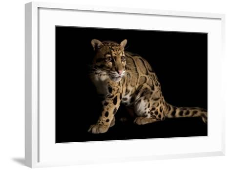 A Federally Endangered Clouded Leopard, Neofelis Nebulosa-Joel Sartore-Framed Art Print