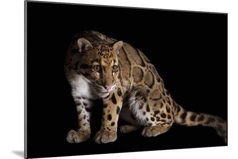 A Clouded Leopard, Neofelis Nebulosa-Joel Sartore-Mounted Photographic Print