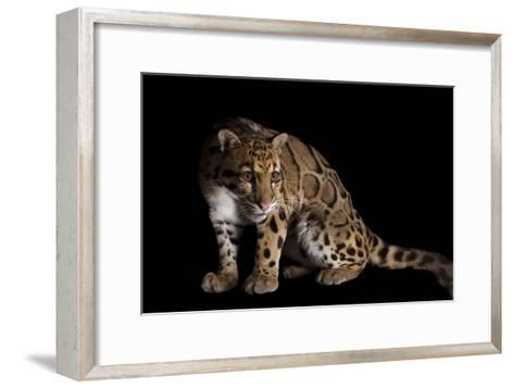 A Clouded Leopard, Neofelis Nebulosa-Joel Sartore-Framed Art Print