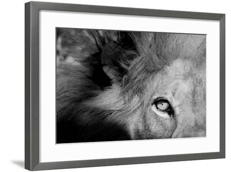 Close Up of the Eye of a Male Lion, Panthera Leo-Sergio Pitamitz-Framed Art Print