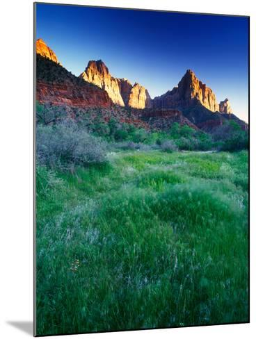 Lush Spring Meadows at the Foot of Rock Formations in Zion National Park-Keith Ladzinski-Mounted Photographic Print
