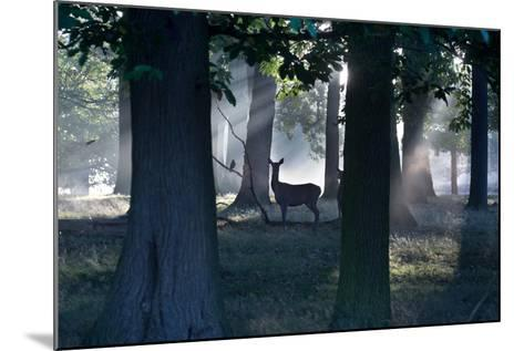 A Red Deer Doe and a Crow Wait in a Misty Forest in Richmond Park-Alex Saberi-Mounted Photographic Print