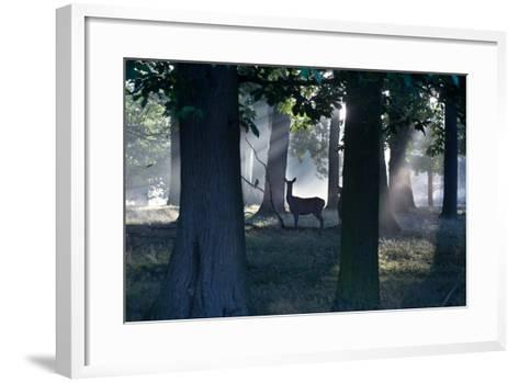 A Red Deer Doe and a Crow Wait in a Misty Forest in Richmond Park-Alex Saberi-Framed Art Print