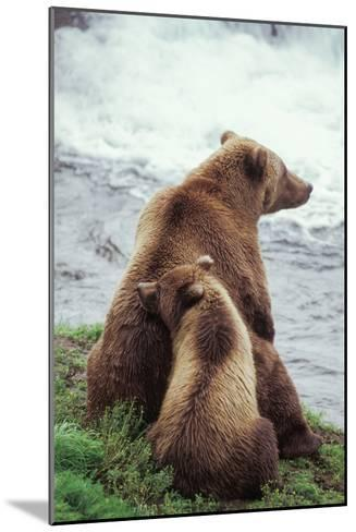 A Grizzly Bear Cub Nuzzles its Mother by a Waterfall-Tom Murphy-Mounted Photographic Print