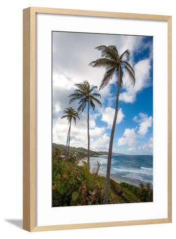 The Palm Lined and Rocky Beach at Bathsheba-Matt Propert-Framed Art Print