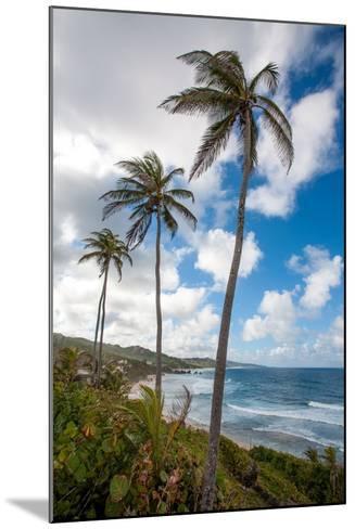 The Palm Lined and Rocky Beach at Bathsheba-Matt Propert-Mounted Photographic Print