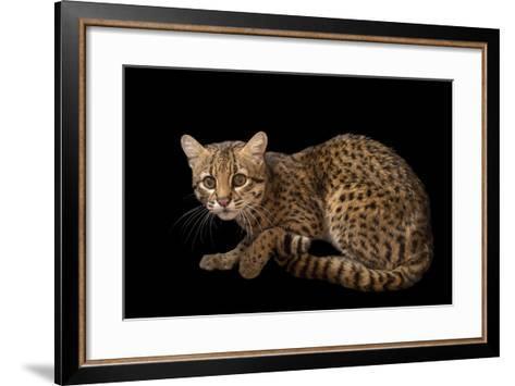 A Geoffroy's Cat, Leopardus Geoffroyi, at the Cincinnati Zoo-Joel Sartore-Framed Art Print