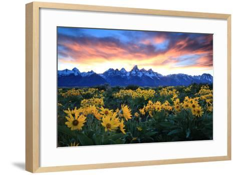 Alpine Sunflowers Illuminated by a Glowing Sunset over Snow-Capped Mountains-Robbie George-Framed Art Print