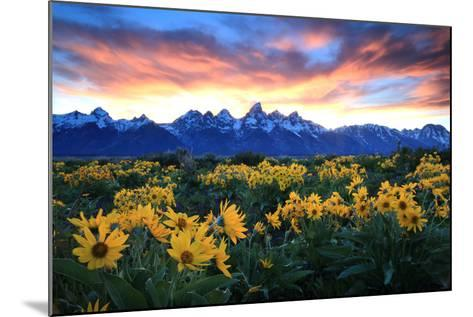 Alpine Sunflowers Illuminated by a Glowing Sunset over Snow-Capped Mountains-Robbie George-Mounted Photographic Print