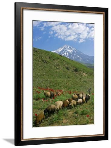 A Shepherd and His Sheep on the Hills Near Mount Damavand, a Sacred Mountain in Persian Culture-Babak Tafreshi-Framed Art Print