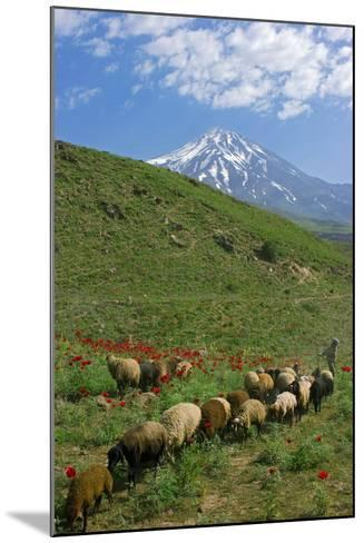 A Shepherd and His Sheep on the Hills Near Mount Damavand, a Sacred Mountain in Persian Culture-Babak Tafreshi-Mounted Photographic Print