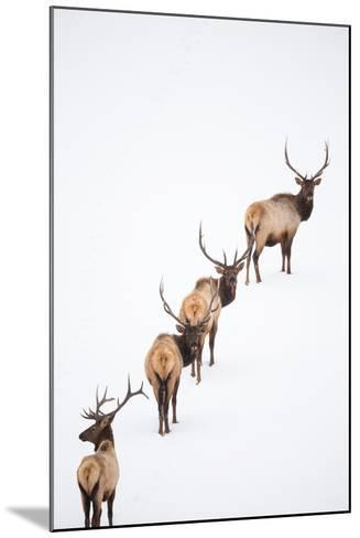 A Group of Elk Cross an Ice and Snow-Covered Lake in a Totally White Landscape-Robbie George-Mounted Photographic Print