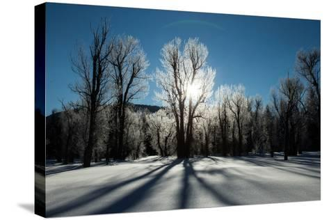 Sunlight Through Ice-Covered Trees in a Snowy Landscape. a Halo over the Sun-Robbie George-Stretched Canvas Print