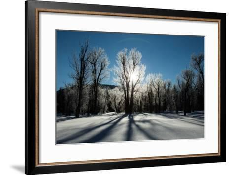 Sunlight Through Ice-Covered Trees in a Snowy Landscape. a Halo over the Sun-Robbie George-Framed Art Print