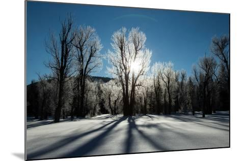 Sunlight Through Ice-Covered Trees in a Snowy Landscape. a Halo over the Sun-Robbie George-Mounted Photographic Print