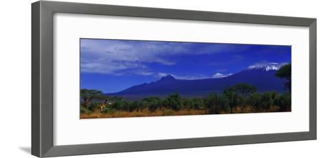 Giraffes and Acacia Trees with a Moonlit Backdrop of Mount Kilimanjaro, Kibo and Mawenzi Peaks-Babak Tafreshi-Framed Art Print
