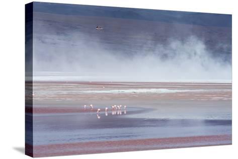Salt Dust Shrouds James' Flamingos Foraging in Laguna Colorada-Alex Saberi-Stretched Canvas Print