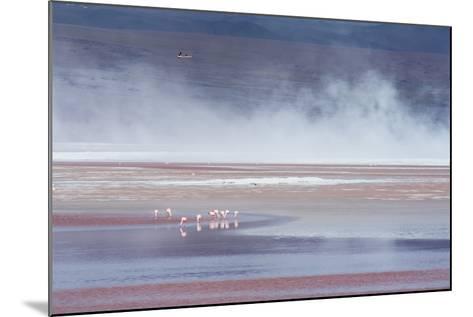 Salt Dust Shrouds James' Flamingos Foraging in Laguna Colorada-Alex Saberi-Mounted Photographic Print