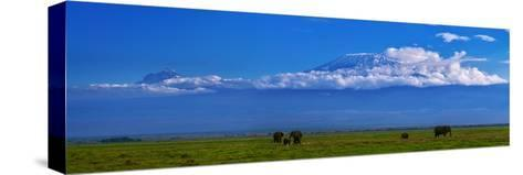 A Herd of African Elephants in a Grassland Landscape with Mount Kilimanjaro in the Distance-Babak Tafreshi-Stretched Canvas Print
