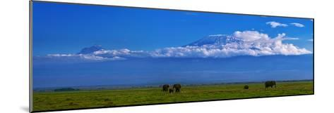 A Herd of African Elephants in a Grassland Landscape with Mount Kilimanjaro in the Distance-Babak Tafreshi-Mounted Photographic Print
