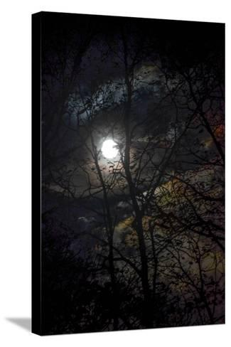 The Full Moon Creates Rainbows in the Clouds, Seen Through Silhouetted Tree Branches-Amy White and Al Petteway-Stretched Canvas Print
