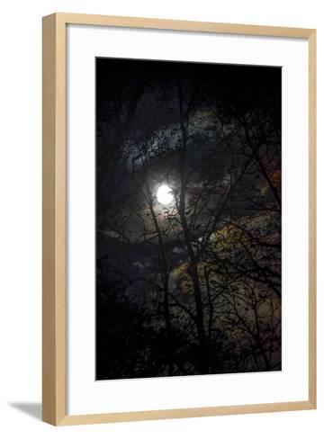 The Full Moon Creates Rainbows in the Clouds, Seen Through Silhouetted Tree Branches-Amy White and Al Petteway-Framed Art Print