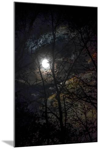 The Full Moon Creates Rainbows in the Clouds, Seen Through Silhouetted Tree Branches-Amy White and Al Petteway-Mounted Photographic Print