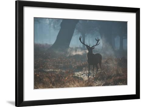 A Red Deer Stag Stands His Ground in a Misty Richmond Park-Alex Saberi-Framed Art Print