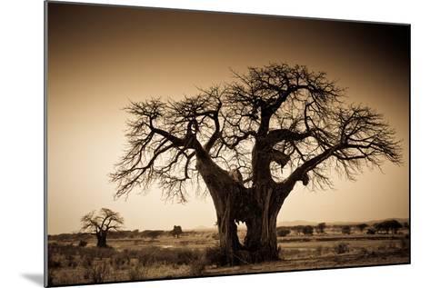 An Elephant-Made Hole in a Large Baobab Tree, Ruaha National Park, Tanzania-Robin Moore-Mounted Photographic Print