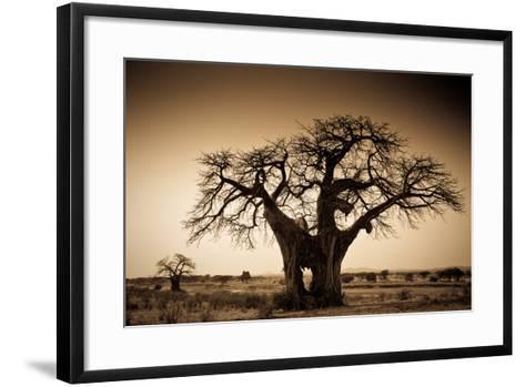 An Elephant-Made Hole in a Large Baobab Tree, Ruaha National Park, Tanzania-Robin Moore-Framed Art Print