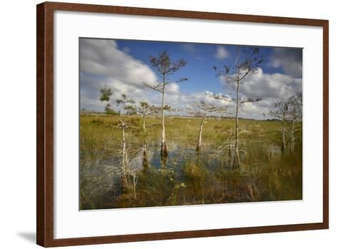 Cypress Trees in Everglades National Park Near Florida City-Raul Touzon-Framed Art Print